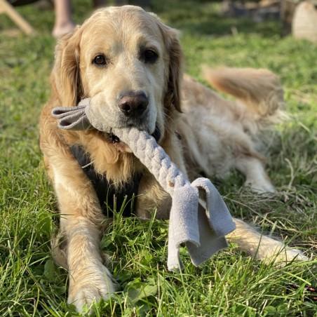 Pies z szarpakiem DOGNOSY pleciony