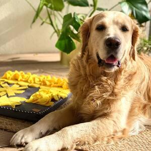 ☀️☀️☀️  #goldenretriever #dogsofinstagram #goldensofinstagram #puppy #dog #goldenretrieverpuppy #puppiesofinstagram #dogs #goldenretrieversofinstagram #golden #puppylove #puppies #goldenretrievers #dogstagram #instadog #love #goldenpuppy #cute #goldens #gloriousgoldens #retriever #doggo #dogoftheday #welovegoldens #doglover #goldenretrieverlove #ilovegolden_retrievers #goldenlove #ilovemydog #dogsofinsta